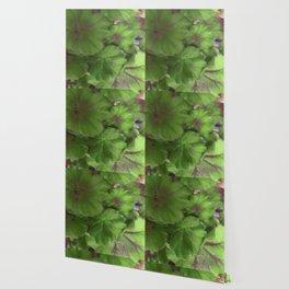 Geranium Wallpaper