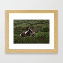 Wild Dartmoor Foals Framed Art Print
