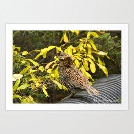 Partridge taking a walk on a beautiful morning Art Print