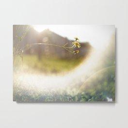 Sun Flares. Metal Print