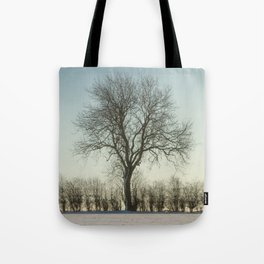 Winter tree in the low sun Tote Bag