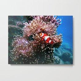 Tropical Undersea Anemone Sea Life Metal Print