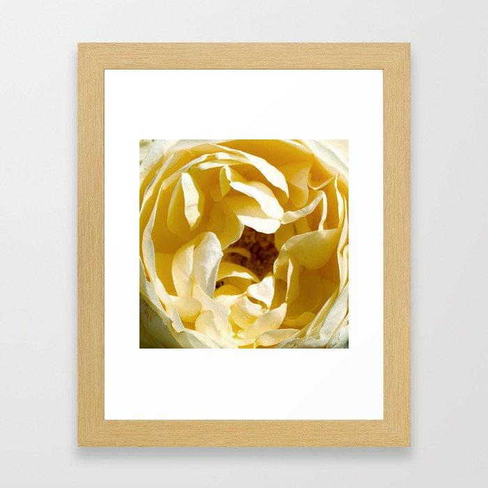 Closeup of Yellow Flower Framed Art Print