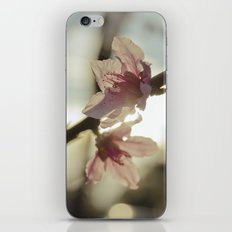 Peach Blossoms iPhone & iPod Skin