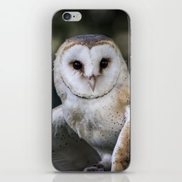 Common Barn Owl portrait. iPhone Skin