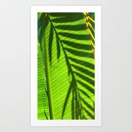 Leaves - Maui Art Print