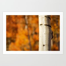 Quaking Aspen - Fall Art Print