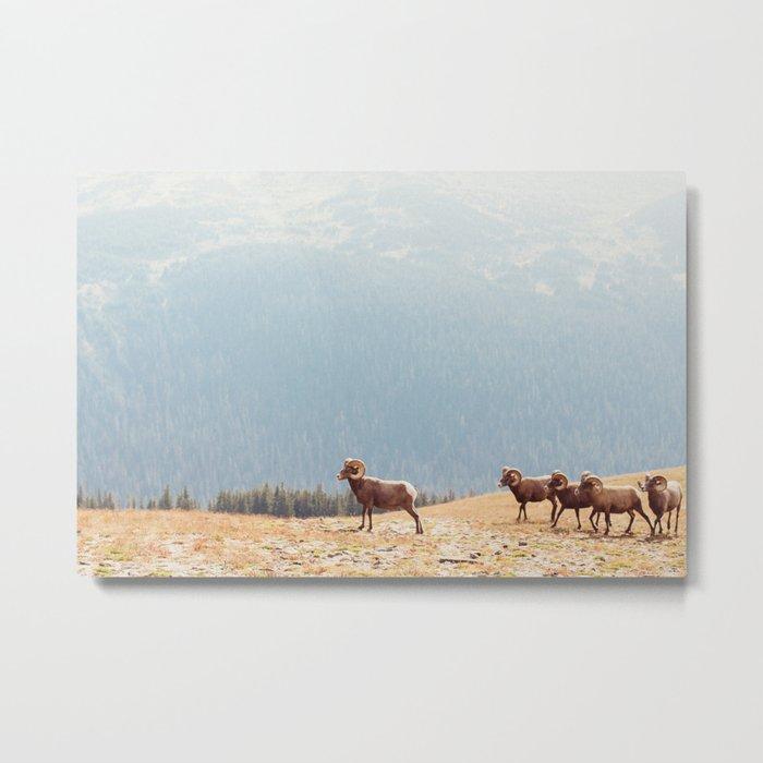 Rams, Landscape Metal Print