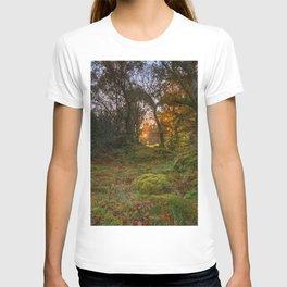 Sunlight wood T-shirt