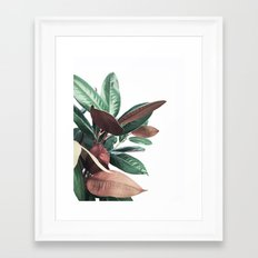 Grandiflora Framed Art Print
