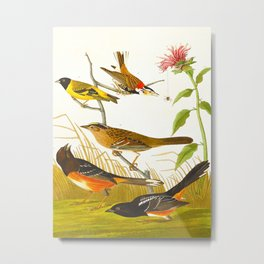 chestnut colored finch Metal Print