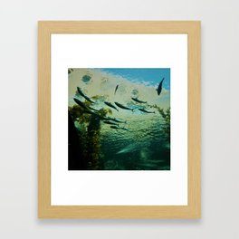 The Fish at School Framed Art Print