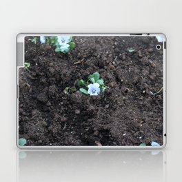 Blue Pansy Laptop & iPad Skin