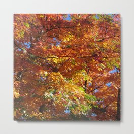 Fallbeauty/Autumn foliage Metal Print