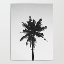 Palm, Tree, Nature, Tropical, Modern, Minimal, Interior, Wall art Poster