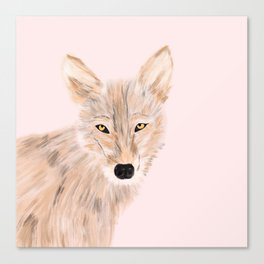 Indian wolf Canvas Print