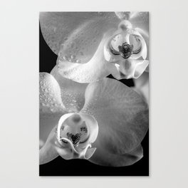 Orchid with Morning Dew (Orchidee mit Morgentau) Canvas Print