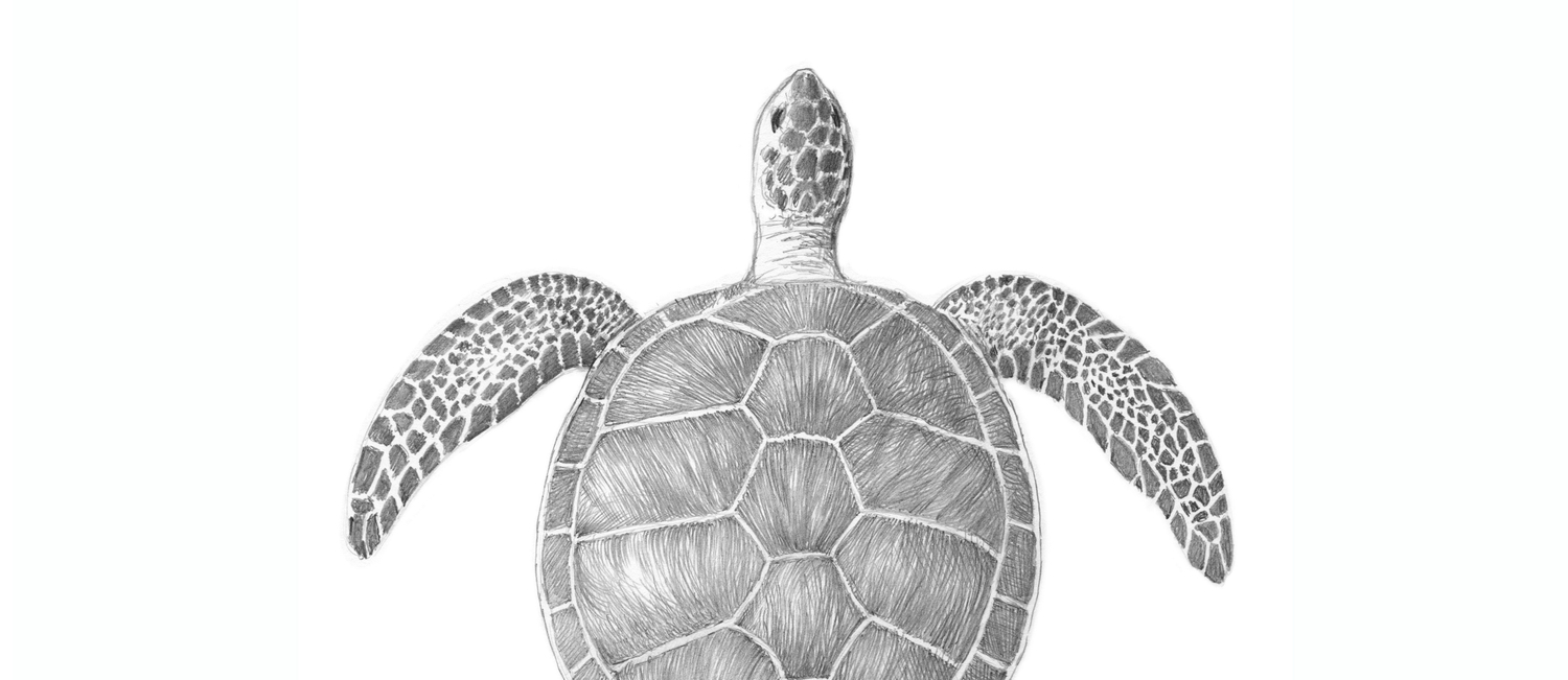 Sea turtle pencil drawing coffee mug