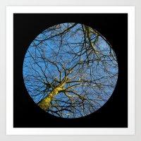 Trees from below 2 Art Print