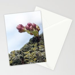 Cherry Blossoms 5 Stationery Cards