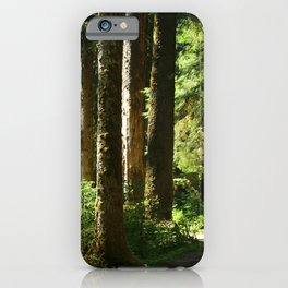 Walkway in Hoh Rainforest iPhone Case