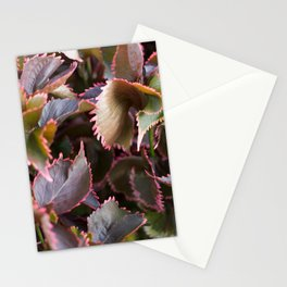 Color Tropical Stationery Cards