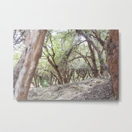 Perspective of Sacsayhuaman trees Metal Print