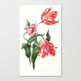 Sweet tulips Canvas Print