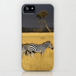 Zebra in Afternoon Light iPhone Case