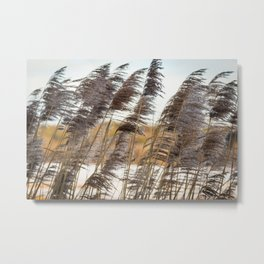 Reed grass Metal Print