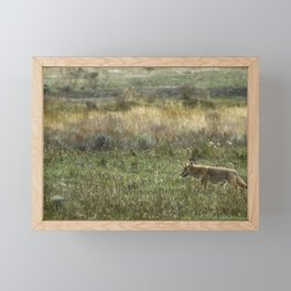 Coyote on the Prowl No. 2 Framed Mini Art Print