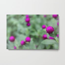 Flower Bulbs: Amaranthaceae Metal Print