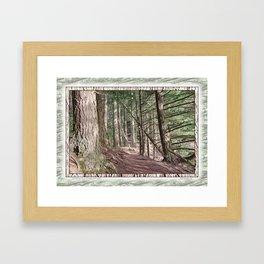 SHADOWS ON A WOODLAND PATH Framed Art Print