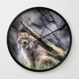 Canadian Lynx - Erie Zoo -Erie, PA Wall Clock