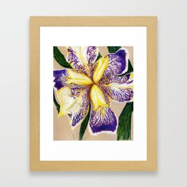 Bearded Iris Framed Art Print