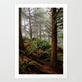 Where the Redwoods Grow Art Print
