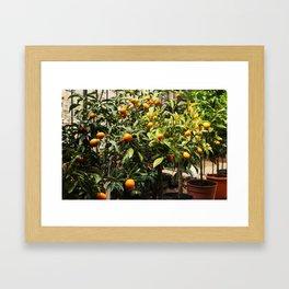 Italian Oranges Framed Art Print