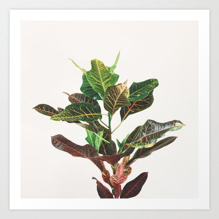 Croton Art Print
