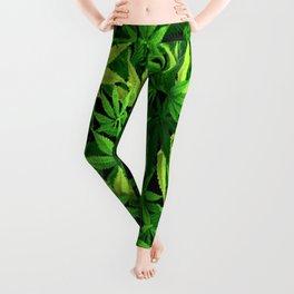 Cannabis Leggings