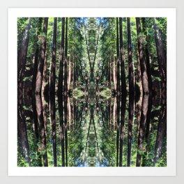 Muir Woods Art Print