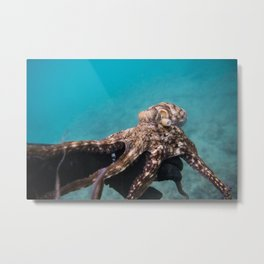 Octopus Holding on Metal Print