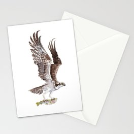 Osprey and Rainbow Trout Stationery Cards