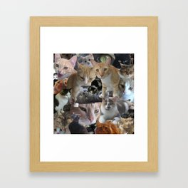 Cats of the neighborhood Framed Art Print