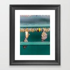 Hatching butterflies Framed Art Print