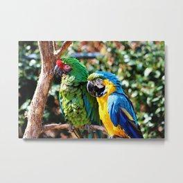 Macaw Parrots Metal Print