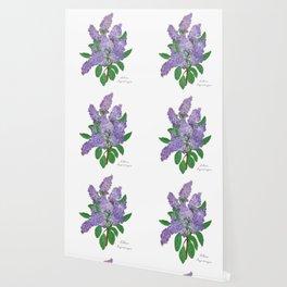 Lilacs: Syringa Wallpaper