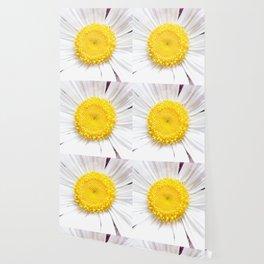 Daisy Flower Close-Up #1 #art #society6 Wallpaper