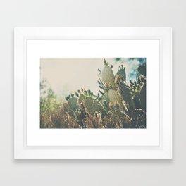 desert prickly pear cactus ... Framed Art Print