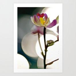 Spot Light Flower Art Print