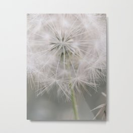 Soft Wishes Metal Print